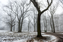 Snowy winter park in mist Royalty Free Stock Photography