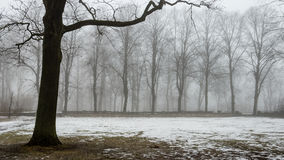 Snowy winter park in mist Royalty Free Stock Images