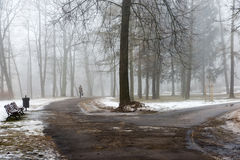 Snowy winter park in mist. Cold winter park in mist with snow covered tree trunks Royalty Free Stock Photography