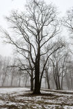 Snowy winter park in mist Royalty Free Stock Photos