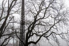 Snowy winter park in mist Stock Photos