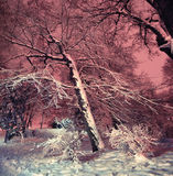 Snowy winter park at night Stock Photography
