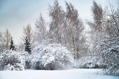 Snowy winter park in Russia, tree wth branches. Cold weather. Snowy winter park in Russia, tree wth branches royalty free stock image