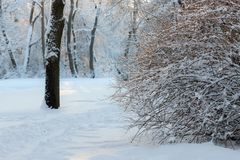 Snowy winter park stock photography