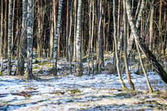 Snowy winter park in sunny weather Royalty Free Stock Image
