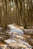 Snowy winter park in sunny weather Royalty Free Stock Photo