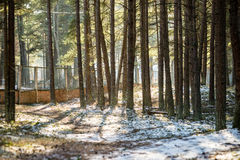 Snowy winter park in sunny weather Royalty Free Stock Images