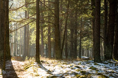 Snowy winter park in sunny weather Royalty Free Stock Photography
