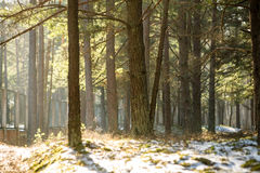 Snowy winter park in sunny weather Stock Photography