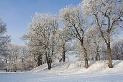 Snowy winter park with white trees. And small hill Royalty Free Stock Photos