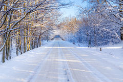 Snowy winter in Poland. Snowy road in winter forest of Poland Royalty Free Stock Photo