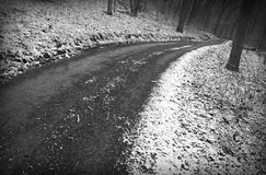 Snowy winter road. Through woods, b/w Stock Image