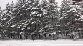Snowy winter road during blizzard. Heavy snow storm. Sideways movement view from the window cars Christmas trees snow