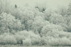Snowy winter Stock Images