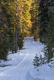 Snowy Winter Road in Forest. A snowy mountain maintained road in the forest of central Oregon royalty free stock photos