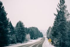 Snowy winter road among frozen forest after sleet. Cold weather, snowstorm, bad visibility. Moscow area. Winter road among the snow-covered forest Royalty Free Stock Photos