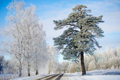 Snowy winter road and frozen trees Stock Image