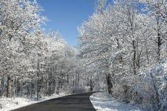 Snowy Winter Road Scene Stock Image