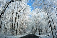 Snowy Winter Road Scene Royalty Free Stock Image