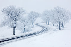 Snowy winter road, trees with snow and fog Royalty Free Stock Image