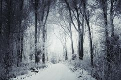 Snowy winter road through the woods stock photography