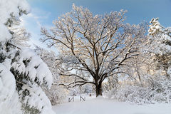 Snowy Winter Scene Royalty Free Stock Photos
