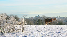 Snowy winter scene with horses Stock Images