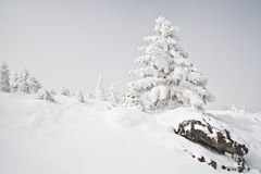Snowy Winter Royalty Free Stock Image