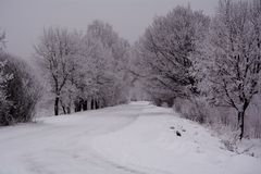 Snowy winter. New year`s eve. snow-covered birch grove.the road home Royalty Free Stock Photos