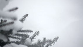 Snowy winter tree in a park. Close-up stock video footage