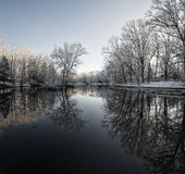 Snowy Winter Tree Reflections Royalty Free Stock Photography