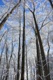 Snowy Winter Tree Scene Royalty Free Stock Photo