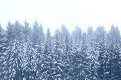 Snowy winter trees Stock Photography