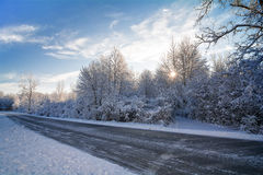 Snowy Winter Trees Stock Images