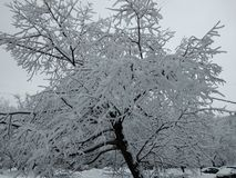 Snowy winter trees 6. Beautiful colorful texture and background, good for you. Snowy winter trees near my house. Moscow, Russia royalty free stock photography