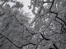 Snowy winter trees 2. Beautiful colorful texture and background, good for you. Snowy winter trees near my house. Moscow, Russia stock photography