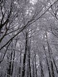 Snowy winter trees 8. Beautiful colorful texture and background, good for you. Snowy winter trees near my house. Moscow, Russia royalty free stock photo