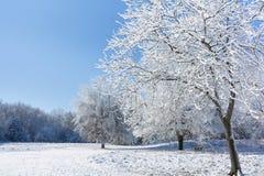 Snowy Winter Trees Stock Photos
