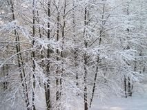 Beautiful winter trees, Lithuania Stock Image