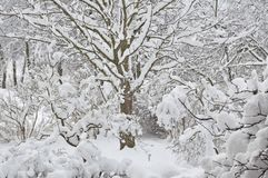 Snowy winter trees, fresh new snow covered garden, lilac branches after blizzard snowstorm, heavy snowfall drifts, multiple tree royalty free stock photos
