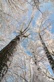 Snowy Winter Trees Royalty Free Stock Photos