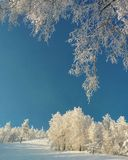 Snowy winter view with a blue sky an white trees Royalty Free Stock Photography