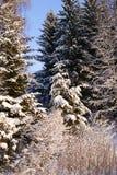 Snowy-Winter-Wald Lizenzfreies Stockfoto