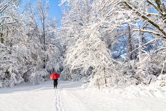 Snowy Winter Walk Stock Photography