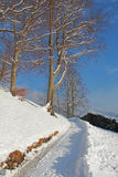Snowy winter walking way Royalty Free Stock Images