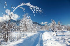 Snowy winter way Stock Photos