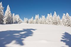 Snowy winter wonderland. Snowy mountainous winter wonderland under sunny blue skies. Christmas landscape with snow capped coniferous forest in Steiermark royalty free stock photo