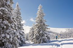 Snowy winter wonderland with trees and blue sky. Snowy mountainous winter wonderland under sunny blue skies. Christmas landscape with snow capped coniferous stock image