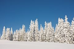 Snowy winter wonderland with trees and blue sky. Snowy mountainous winter wonderland under sunny blue skies. Christmas landscape with snow capped coniferous royalty free stock photography