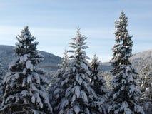 Snowy-Winterholz stockfotos